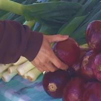 HFS Farmers Market Table